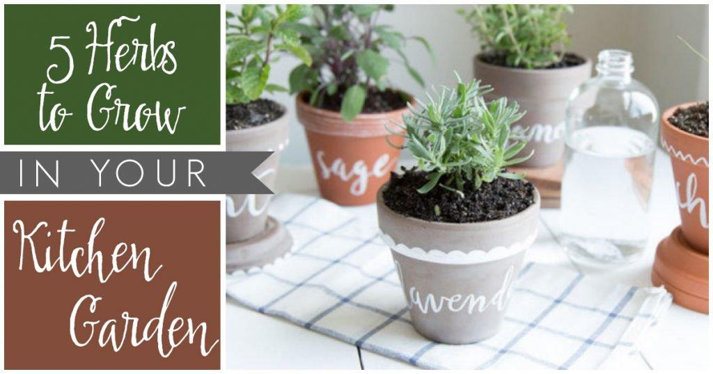 Five Herbs to Grow in Your Kitchen Garden