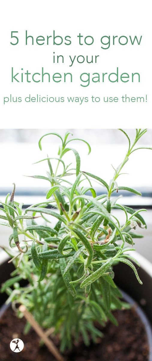 No matter the time of year, or the size of your yard, here are five herbs to grow in your kitchen garden, and delicious gluten-free, real food ways to use them! #garden #herbs #indoorgarden #basil #sage #rosemary #thyme #mint #glutenfree #realfood